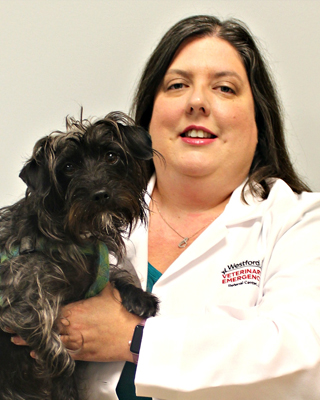 Westford - Chelmsford, MA Veterinarian & Specialists Team